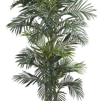 Golden Cane Palm Silk Tree